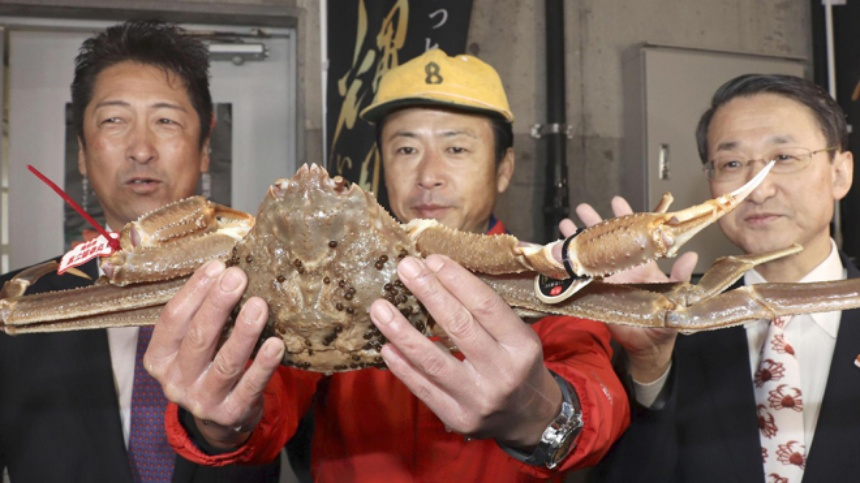 world's expensive crab