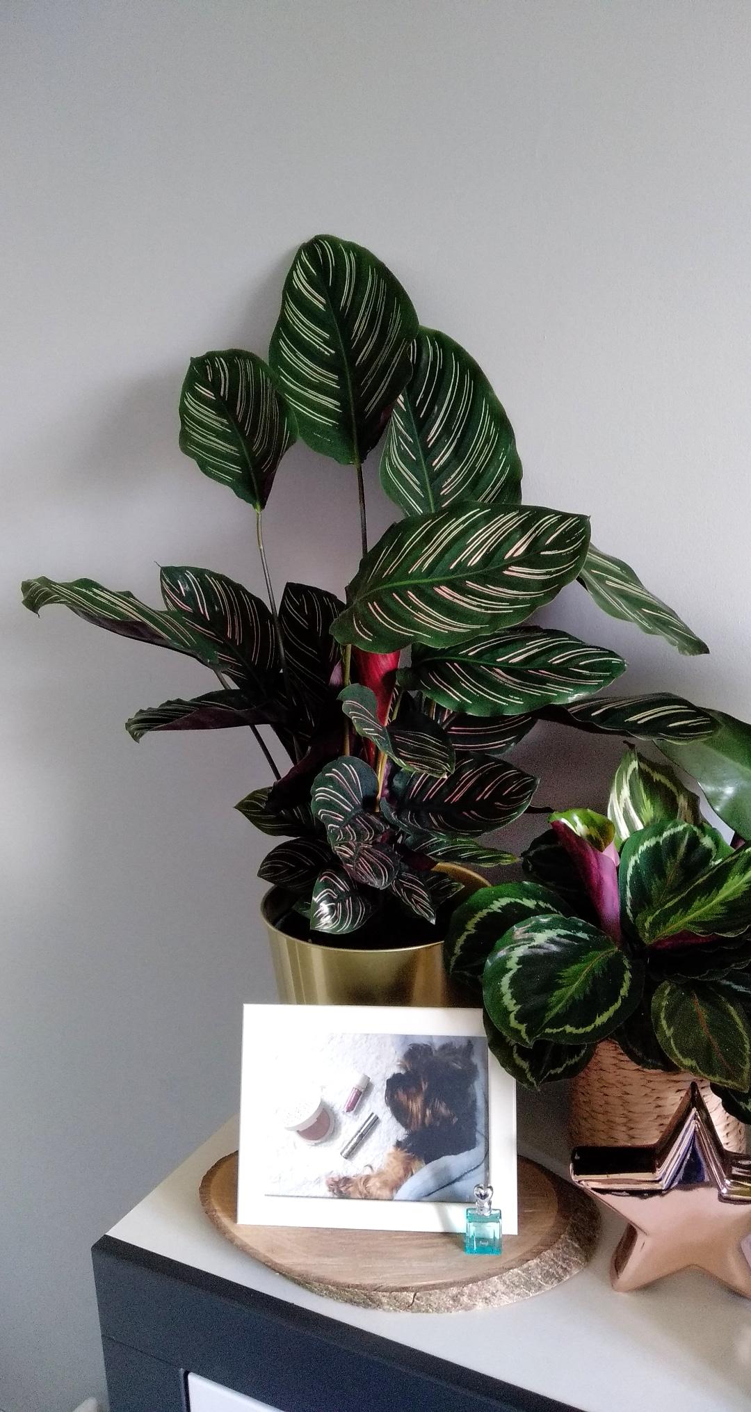 Moja roślinna pasja   Triki i porady dla początkujących   #urbanjungle #polishjungle