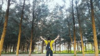 Pohon pinus Pantai Lamaru Balikpapan