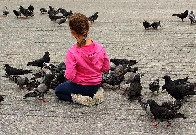 Pigeon , little Girl