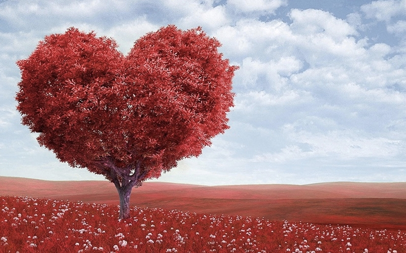 Aşkınızı gülün eşsiz kokusuyla terapiye dönüştürün!