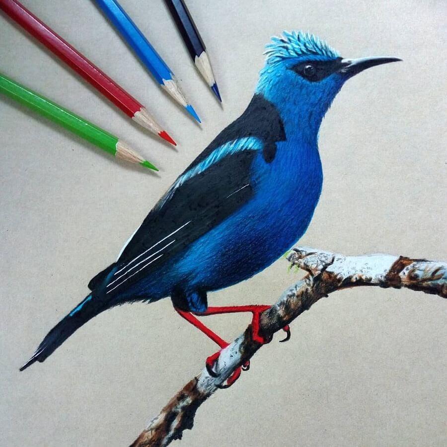 04-Blue-and-black-bird-Bele-www-designstack-co