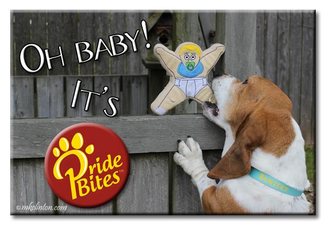Basset Hound biting PrideBites baby doll meme