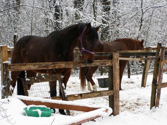 лошади в парке