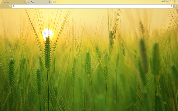 Barley Field Google Chrome Theme
