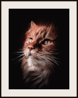 plakat z kotem, plakat rudy kot, kot norweski leśny, plakat z kotem norweskim leśnym, plakat ze zwierzakiem, plakat A3, plakat pionowy A3, plakat dla kociarza