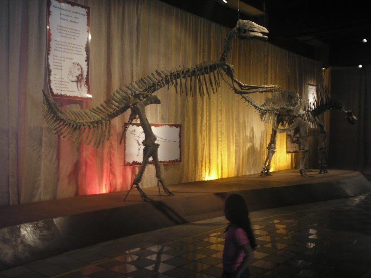Museu de História Natural da PUC Minas em Belo Horizonte