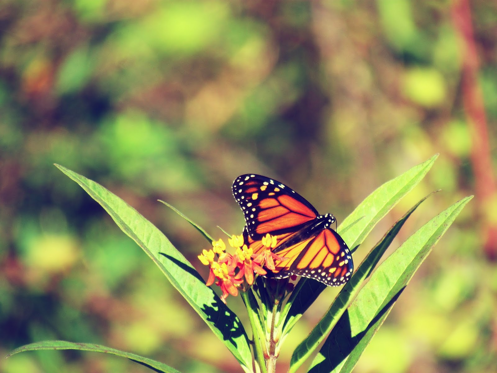 Magical, mystical butterfly creature on a fairy flower plant in Florida