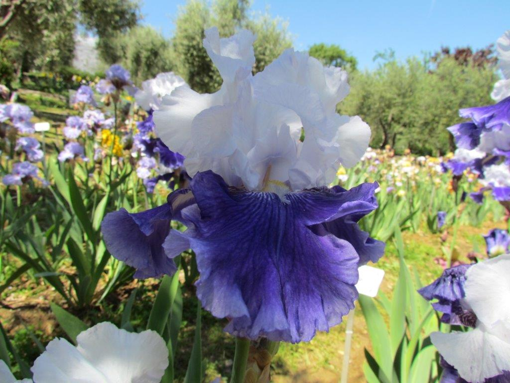 Le epigrafi storiche nascoste e non firenze giardino - Giardino dell iris firenze ...