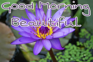 good morning hd wallpaper with flower