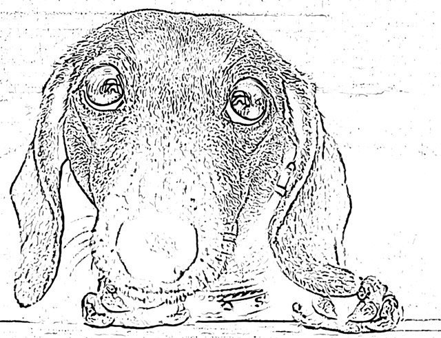 Dogs coloring pages holiday.filminspector.com