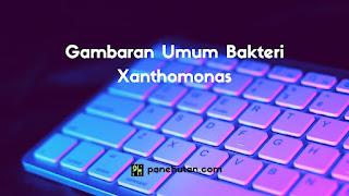 Gambaran Umum Bakteri Xanthomonas