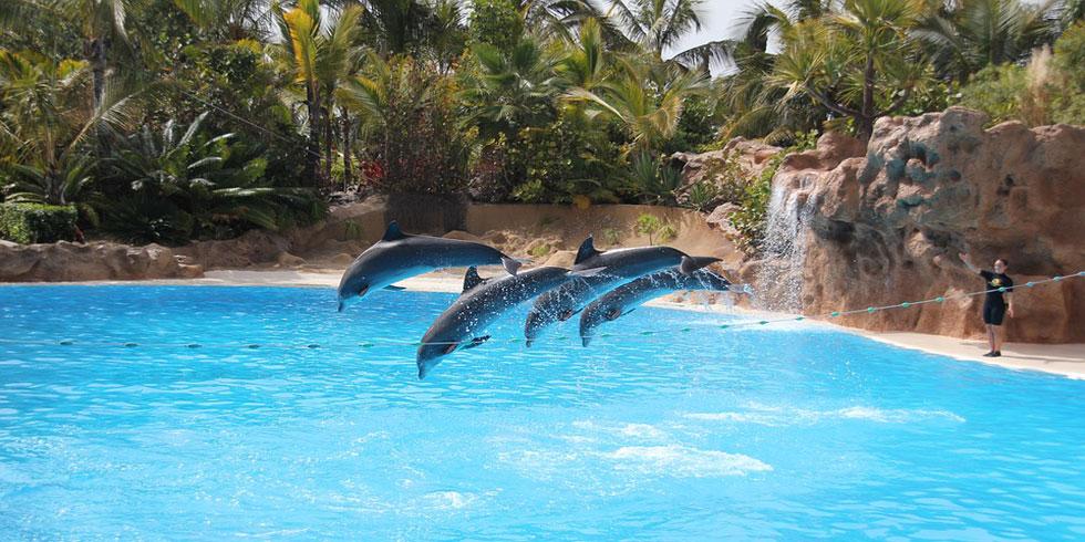 Las atracciones más importantes del Loro Parque, en Puerto de la Cruz (Tenerife)