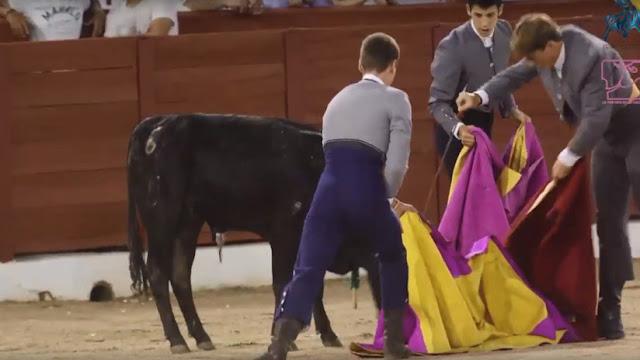 Denuncian la masacre de 24 novillos en escuelas de tauromaquia en España