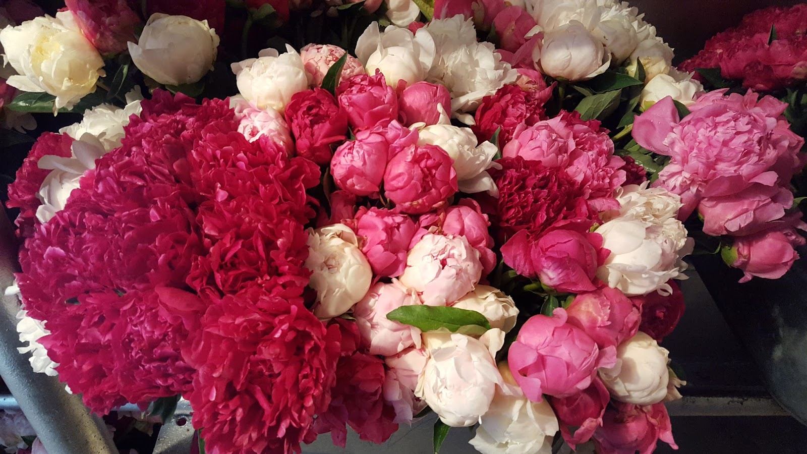 Co Horts Peonies Oh How I Love Thee