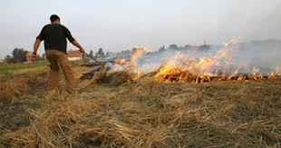 """لماذا فشلت مصر في الاستفادة من """"قش الأرز""""؟"""