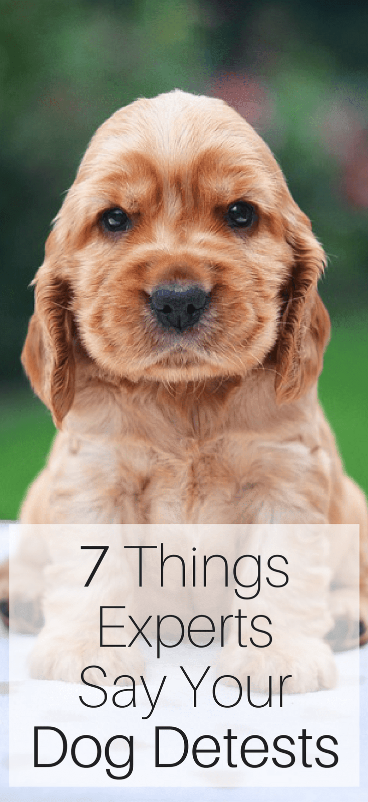 7 Things Experts Says Your Dog Detests