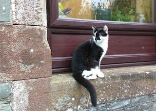 Black and white cat perched on stone windowsill, Wigtown, Scotland