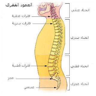 أنواع إنحناءات العمود الفقري