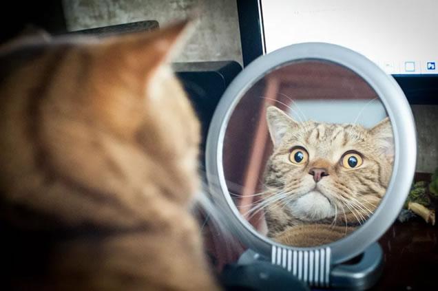 ¿Por qué, cuando traes un gato al espejo, se mira en cualquier parte, pero no a sí mismo?