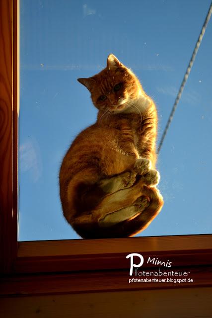 Katze Mimi sitzt auf einem Dachfenster