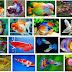 Inilah Faktor faktor Yang Mempengaruhi Kecerahan Warna Ikan Hias