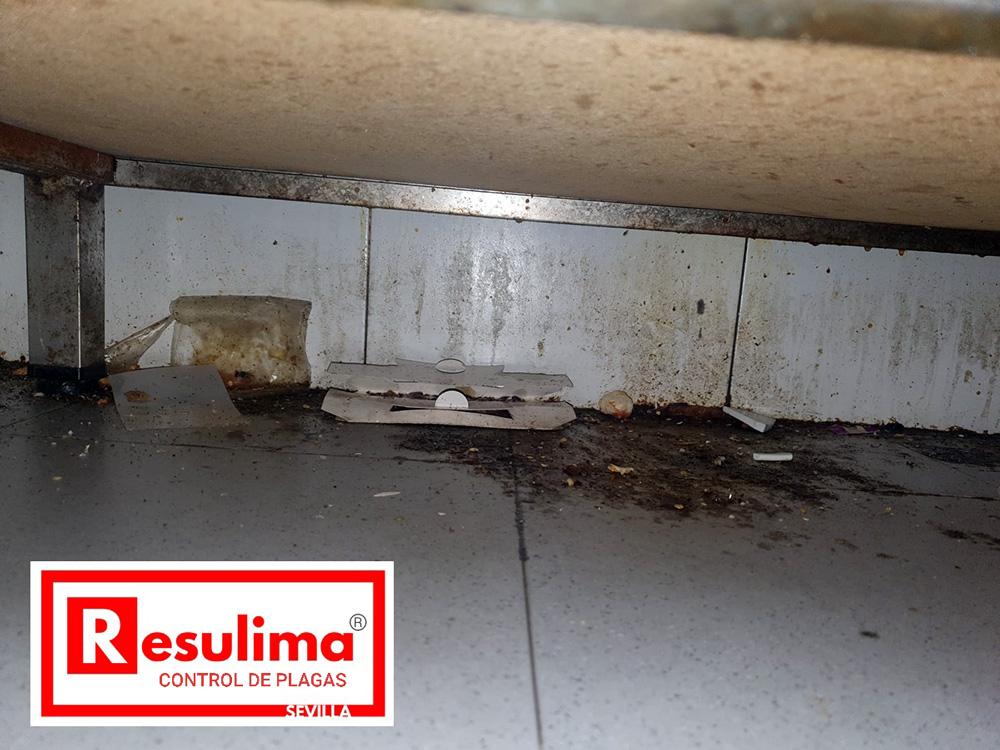 desinsectación control cucarachas Sevilla