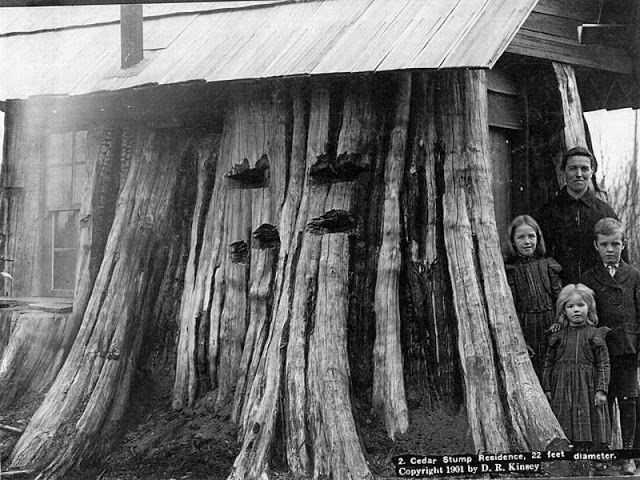 Casas construidas en troncos de árboles a principios del siglo XX