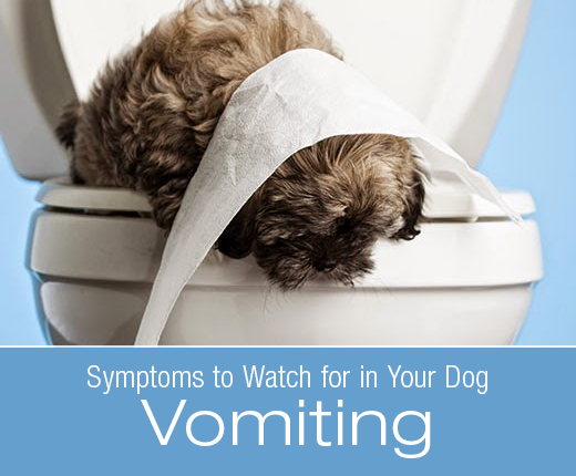 Symptoms to Watch for in Your Dog: Vomiting