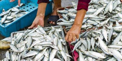 Tips Memilih Ikan Segar di Pasar