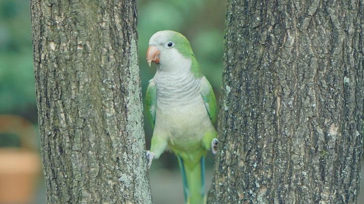 quaker parrot food