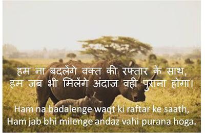 Attitude Shayari, Attitude Shayari in Hindi,