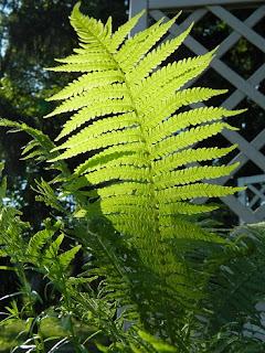 rośliny na balkon, taras, slow life, blog