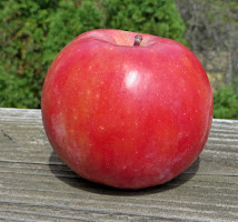Uncut red apple