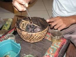 Cara Perawatan Piyikan Cucakrawa Dengan Benar - Burung Cucak Rowo -  Penangkaran Burung Cucak Rowo