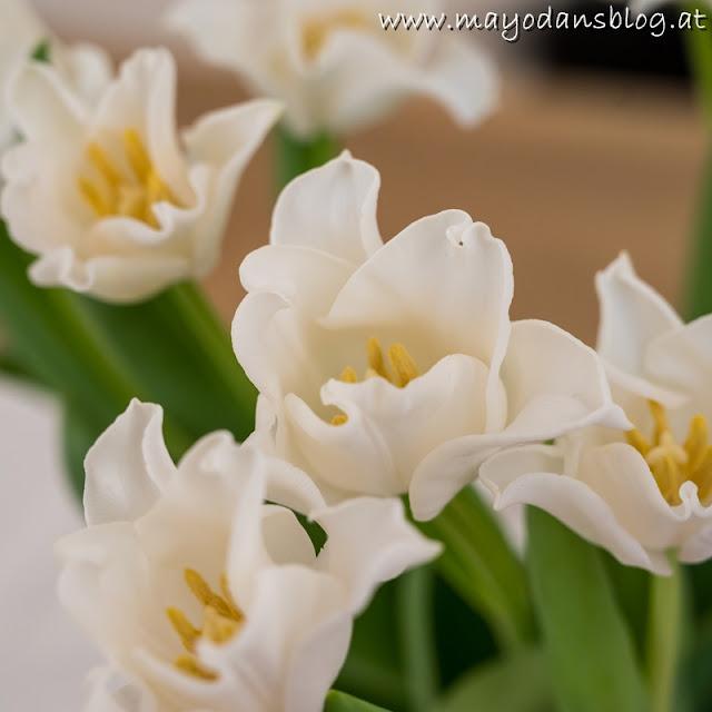 Tulpen weiß