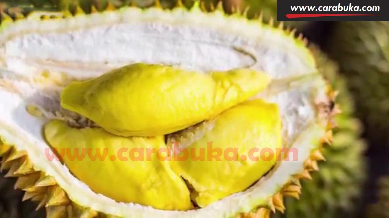 Tips Cara Memilih Durian Matang dan Manis 6