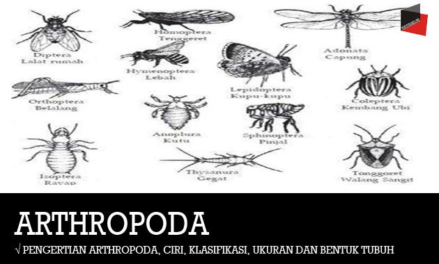 Pengertian Arthropoda, Ciri, Klasifikasi, Ukuran dan Bentuk Tubuh