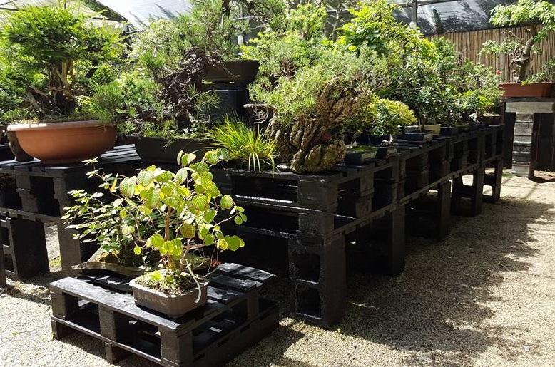 Beticonsejo cuidado bonsai stands - Estantes para macetas ...