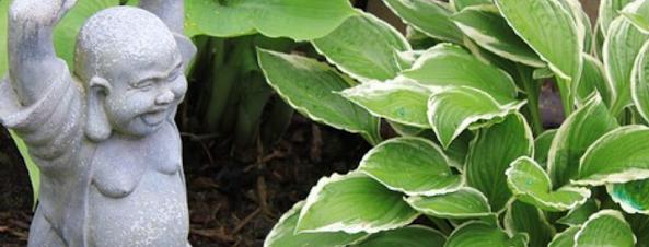 White Margined Hosta Plants alongside statue
