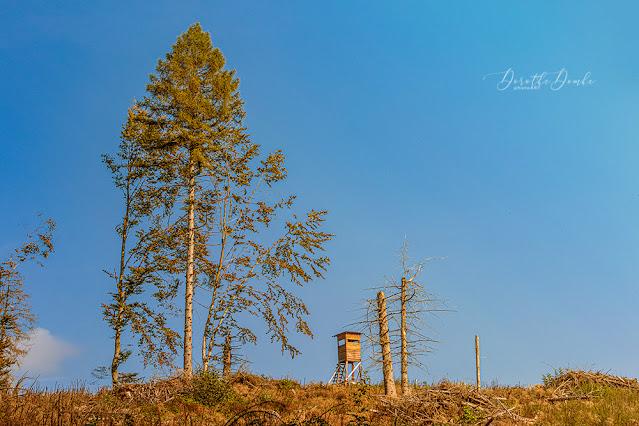 Herbst, autumn, Fotografie, Sauerland, photoart, Dorothe Domke