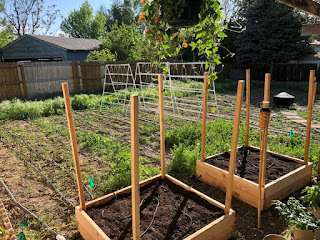 Trellis' erect in urban farm, dirt in potato towers, small plants