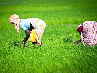 Integration of schemes will increase farmers' income: Meghwal