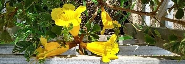 As primeiras flores que começaram a aparecer no começo do mês de março de 2019 foram bastante comemoradas por participantes, parte da população e atletas que utilizam a ciclovia para praticar atividades esportivas.