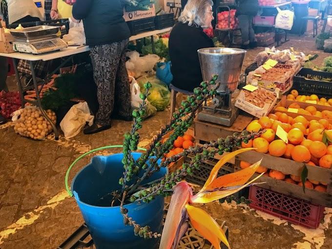Los Mercados de Lagos