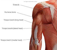 Full Upper Body Workout Routine-triceps