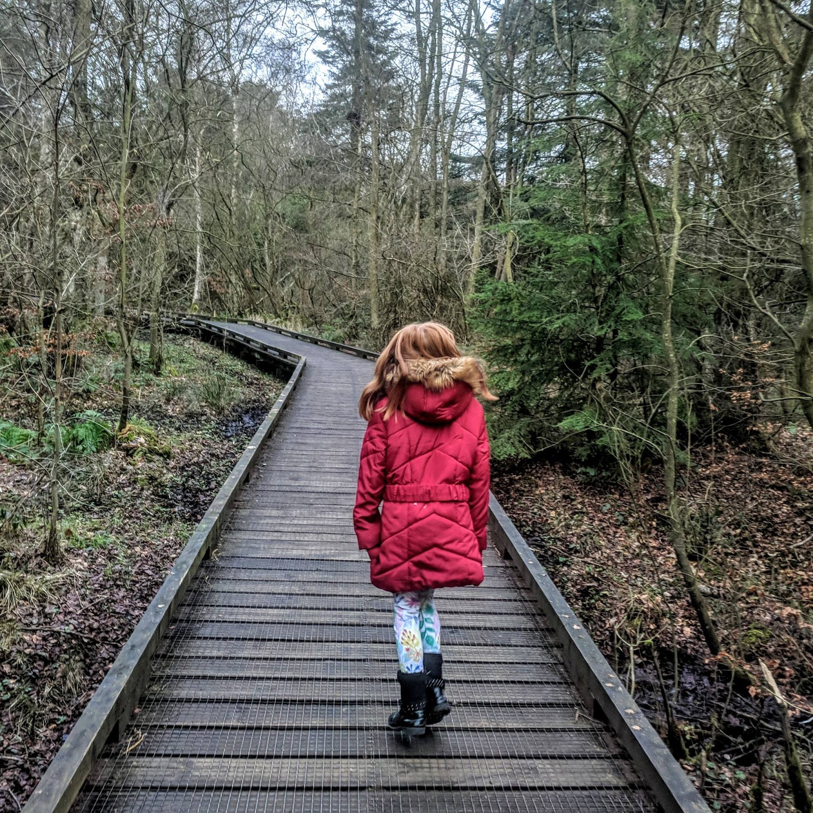 A Guide to Visiting Bolam Lake, Northumberland  - accessible pathways