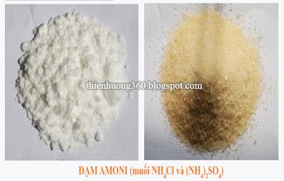 Đạm amoni (các muối NH4Cl, (NH4)2SO4, NH4NO3)