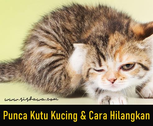 Kutu Kucing, Jenis Dan Cara Menghilangkannya