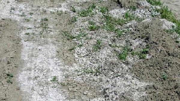 10 jenis tanah di indonesia, jenis tanah dan pemanfaatannya, jenis tanah dan persebarannya, jenis tanah latosol, jenis tanah pdf, jenis tanah kurang subur, jenis tanah dan ciri-cirinya, jenis jenis tanah dan gambarnya